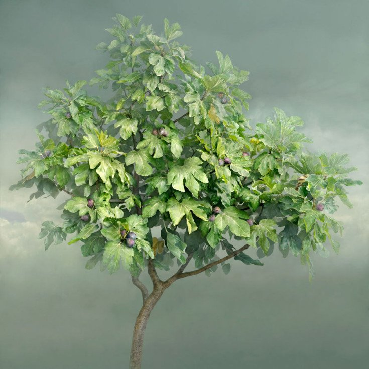 Giornata della terra Irene Kung Fico 2014 Natura Trees I love This Planet